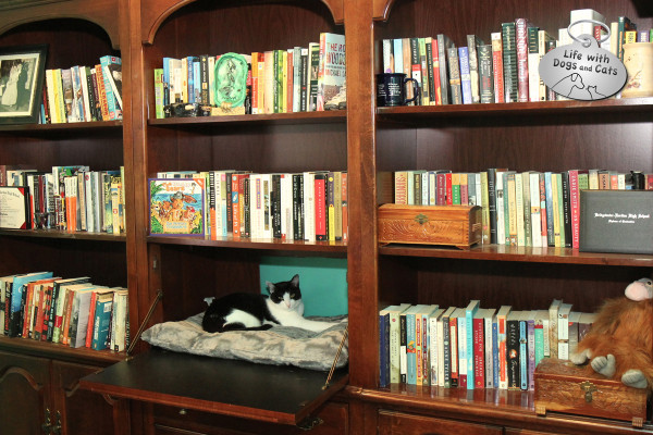 World Cat Day activity: catch up on a few books