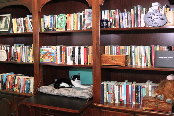 Calvin in bookcase