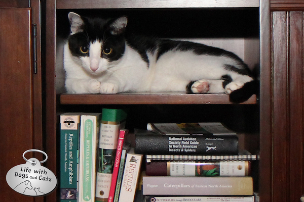Calvin relaxes in a bookcase