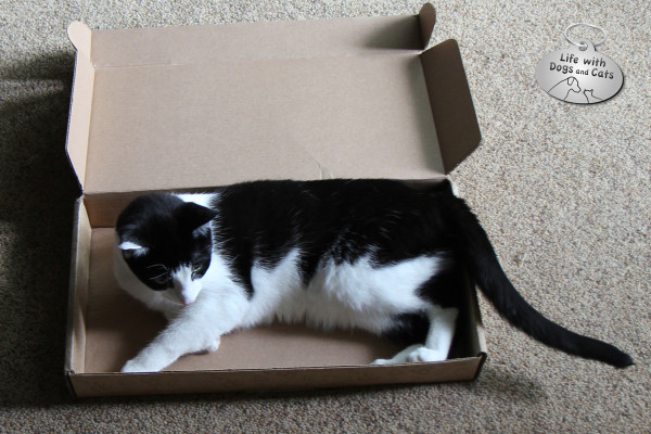 Calvin the cat enjoys the new box