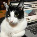 My cat, my editor