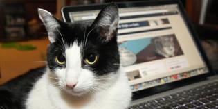 Photo: Cat inspiration