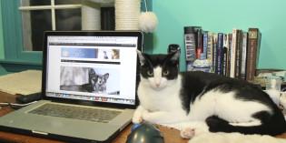 2014 Pet Blogger's Challenge
