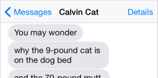 Text from Cat: Occupy Dog Bed