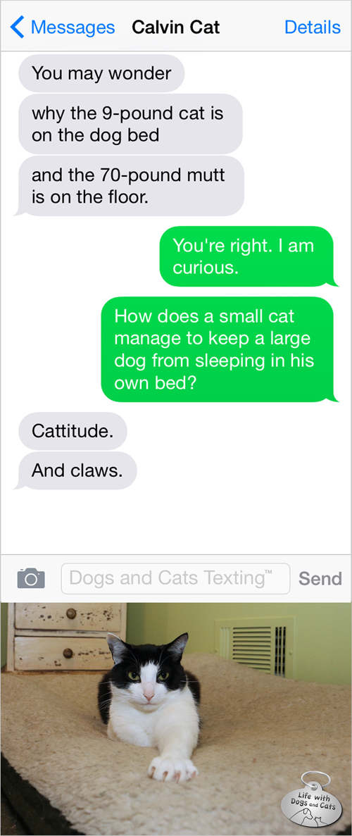 Text from Cat: How can a small cat occupy a dog bed? Cattitude. And claws.