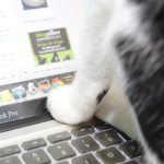 Story: Paws button