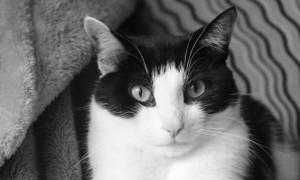 Photo: Calvin, one classy cat