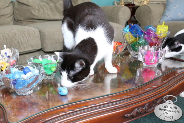 Calvin inspects the dreidel; Elsa Clair is very curious.