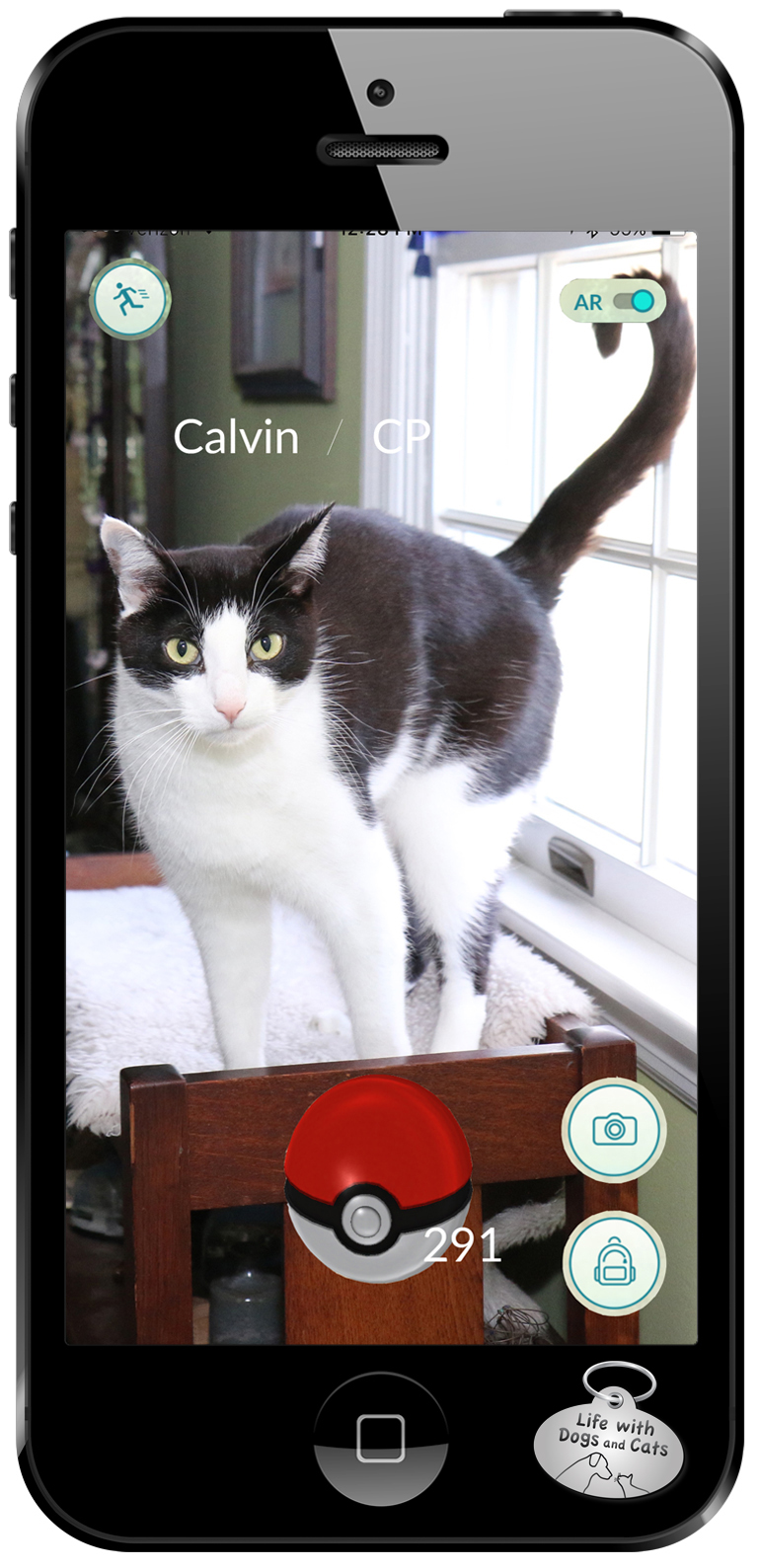 Pokemon are really cats. Caught one, a Calvin.