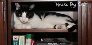 Haiku by Cat: Bookcase