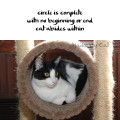 Haiku by Cat: circle is complete / with no beginning or end / cat abides within