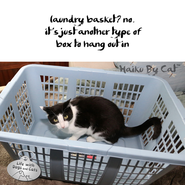 haiku by cat calvin laundry basket life with dogs and cats life