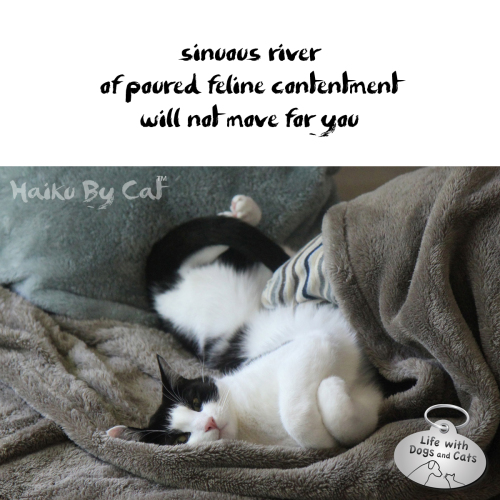 Haiku by Cat: sinuous river / of poured feline contentment / will not move for you