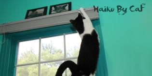 Haiku by Cat: Stretch