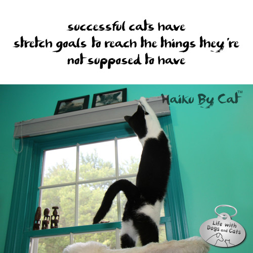 successful cats have  / stretch goals to reach the things / they're not supposed to have
