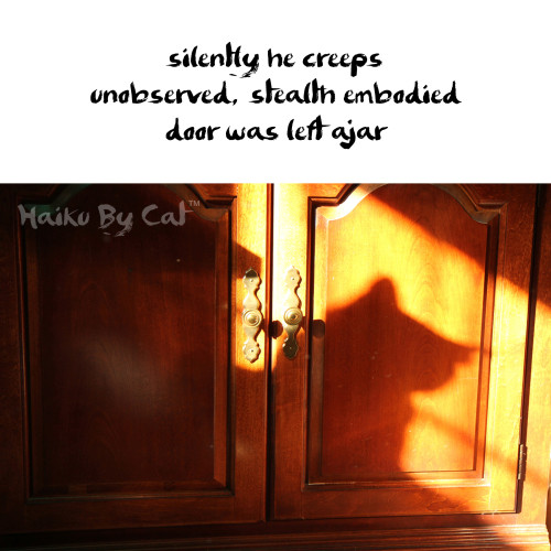 Haiku by Cat: silently he creeps / unobserved, stealth embodied / door was left ajar
