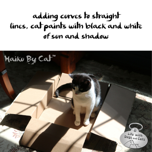 adding curves to straight / lines, cat paints with black and white / of sun and shadow #HaikuByCat