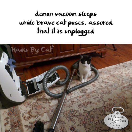 Haiku by Cat: demon vacuum sleeps / while brave cat poses, assured / that it is unplugged