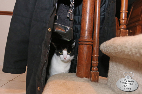 Calvin hides under my purse and inside my winter coat.