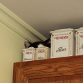 Cat hides behind canisters on top of cabinet