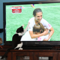 Calvin gives high paws and hugs to the #TeamUSA World Cup Champions