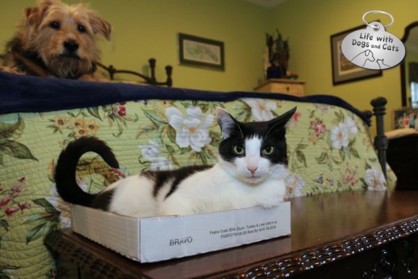 Sharing a house with dogs means giving cats places they feel comfortable and safe.