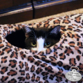 Calvin, tunnel cat
