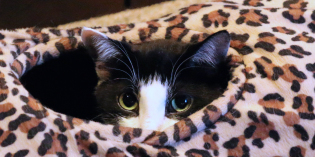 Tunnel of Fun: A favorite cat (and dog) toy