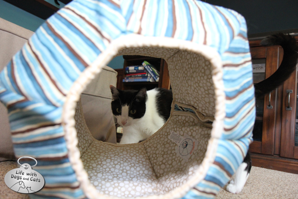 Calvin looks through the Cat Ball