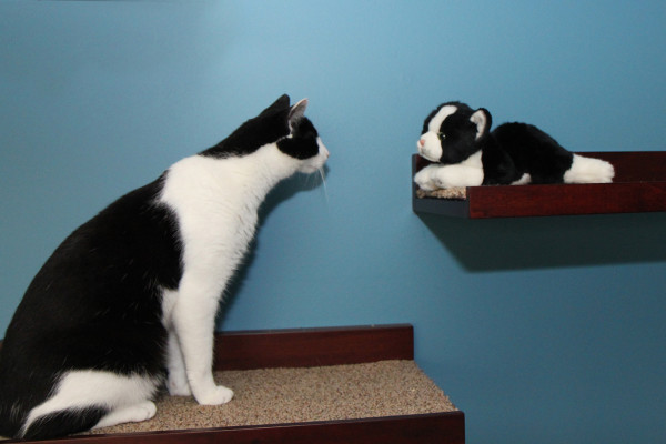 Stare-down between cat and cat toy.