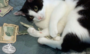 A Tax Day Cat Video: Don't Take My Money