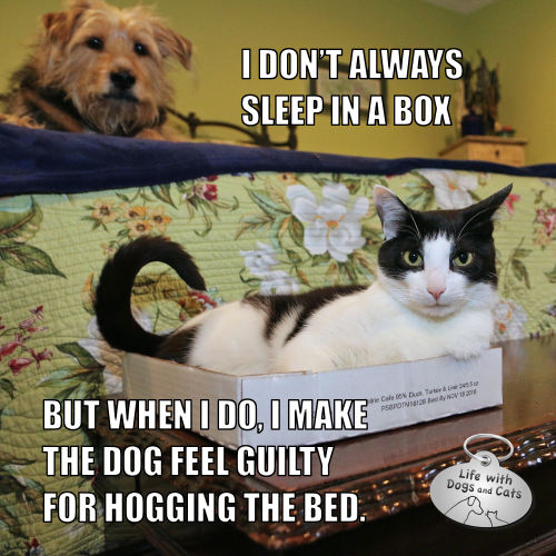 I don't always sleep in a box  but when I do, I make the dog feel guilty for hogging the bed. Most Interesting Cat in the World