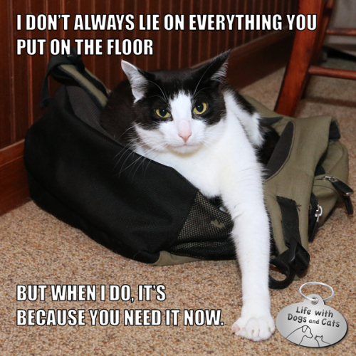 I don't always lie on everything you put on the floor, but when I do, it's because you need it now.