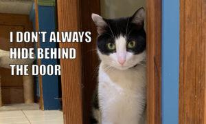 I Don't Always Hide Behind The Door #MostInterestingCatInTheWorld