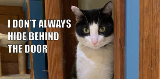 I Don't Always Hide Behind The Door #MostInterestingCatInTheWorld