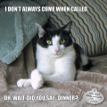 "I don't always come when called. Oh. Wait. Did you say, ""Dinner?"""