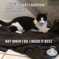 I don't always borrow your jacket, but when I do, I wear it best. #MostInterestingCatInTheWorld