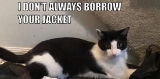 I Don't Always Borrow Your Jacket #MostInterestingCatInTheWorld