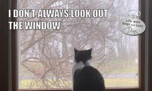 I Don't Always Look Out The Window #MostInterestingCatInTheWorld