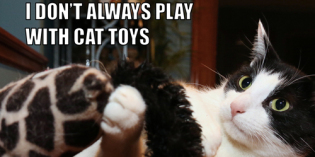 I Don't Always Play With Cat Toys #MostInterestingCatInTheWorld