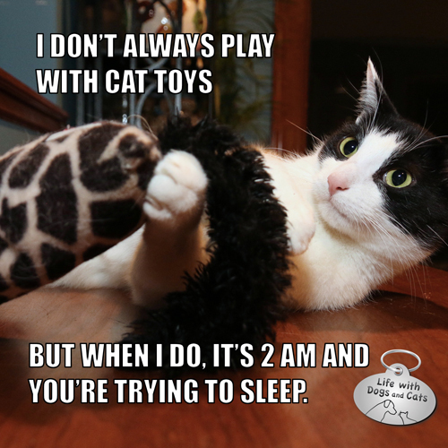 I don't always play with cat toys, but when I do, it's 2 AM and you're trying to sleep #MostInterestingCatInTheWorld