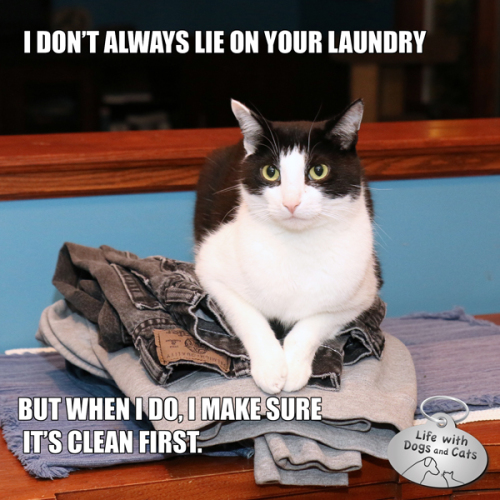 I don't always lie on your laundry, but when I do, I make sure it's clean first.