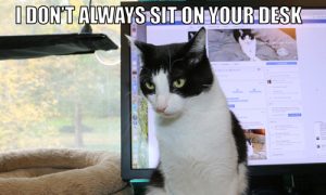 I Don't Always Sit On Your Desk #MostInterestingCatInTheWorld
