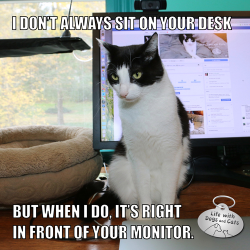 I don't always sit on your desk, but when I do, it's right in front of your monitor.  The Most Interesting Cat In The World