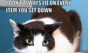 I Don't Always Lie on Every Item You Set Down #MostInterestingCatInTheWorld