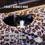 I Don't Always Hide #MostInterestingCatInTheWorld