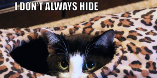 I Don't Always Hide #MostInterestingCatInTheWorld