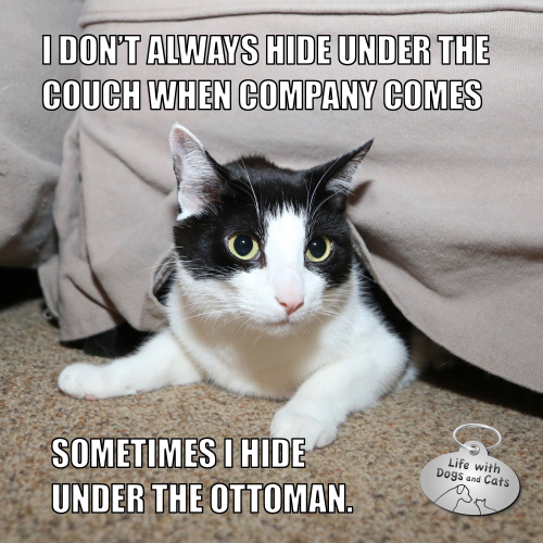 """I don't always hide under the couch when company comes. Sometimes I hide under the ottoman."" #MostInterestingCatInTheWorld #Staycomfy"