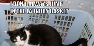 I Don't Always Jump In The Laundry Basket #MostInterestingCatInTheWorld