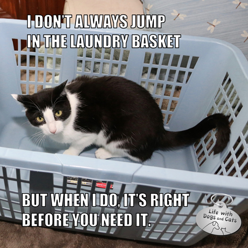 I don't always jump in the laundry basket, but when I do, it's right before you need it. #MostInterestingCatInTheWorld